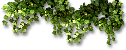 Ivy accent image